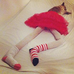 足の長い猫グッチ04