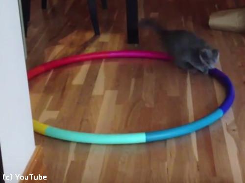 猫フラフープ02