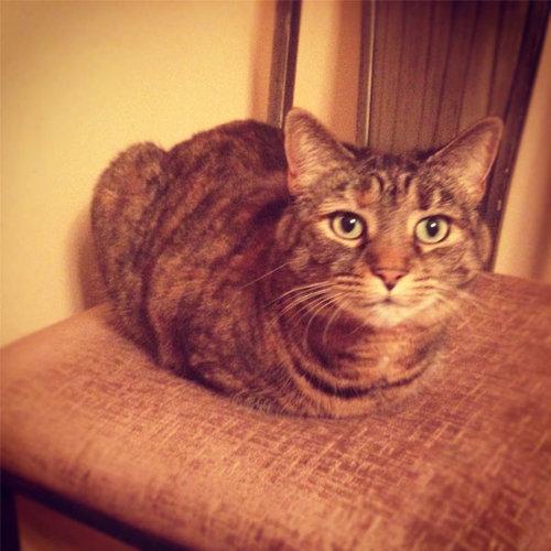 猫の「香箱座り」をパンの塊という理由09