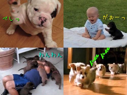 子犬たちが人類に反逆