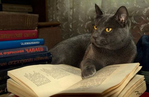 読書猫05