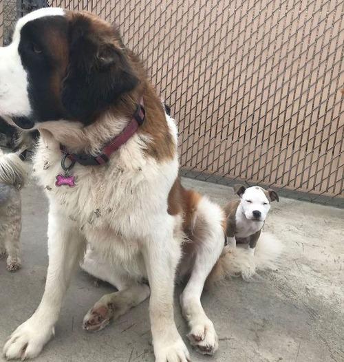 他の犬をまくらにする子犬04
