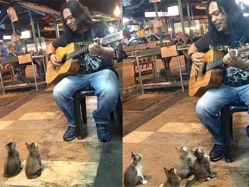 ギターの演奏を聴く子猫たち00