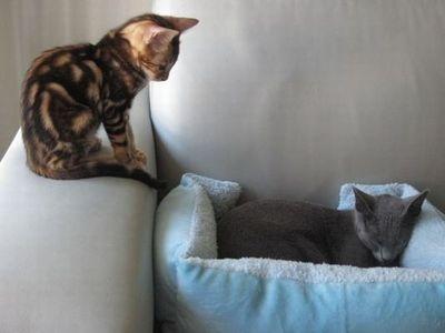 猫の場所取り03
