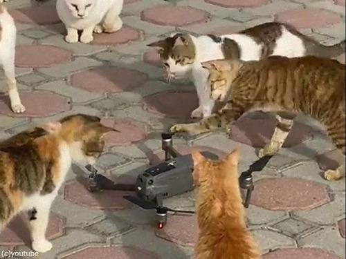 ドローンのプロペラと猫01