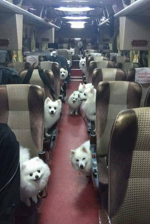すべての座席が犬だった01
