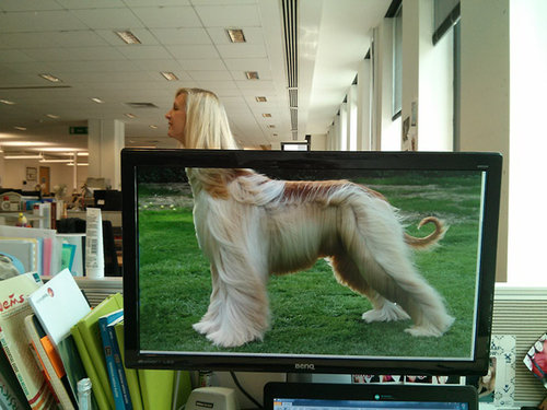 職場で「動物園ごっこ」10