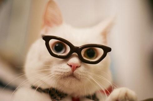 メガネ猫08