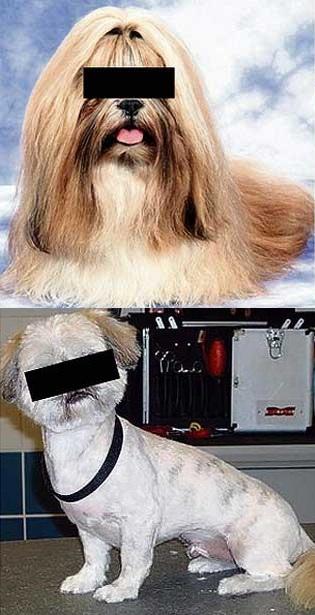 ペットの毛を刈る01