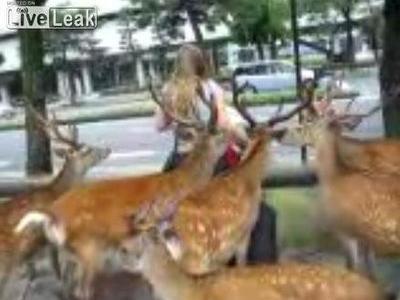 鹿に囲まれる女性