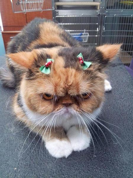13クリスマスいろいろ
