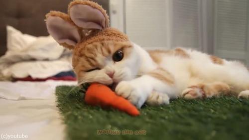 ウサギかと思ったら猫だった04