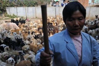 1500匹の犬と200匹の猫01
