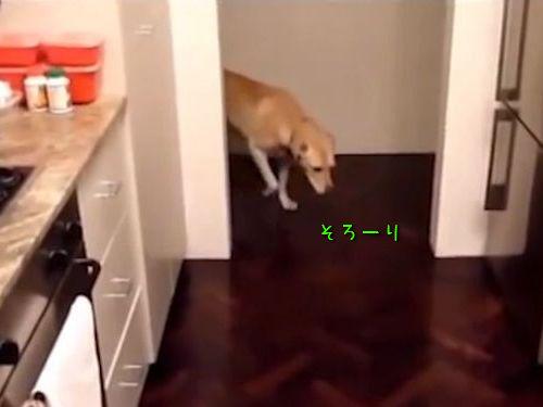 スローモーションみたいな犬の歩き方00