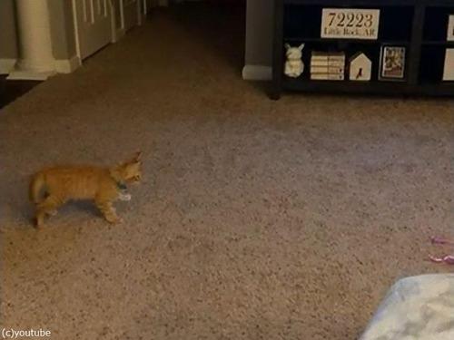独特なステップを踏む子猫00