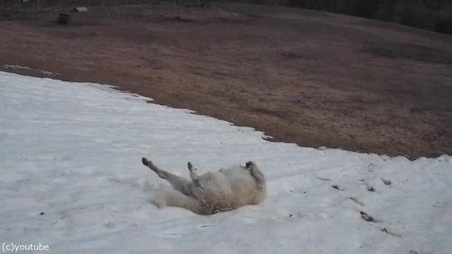 雪に大喜びの犬04