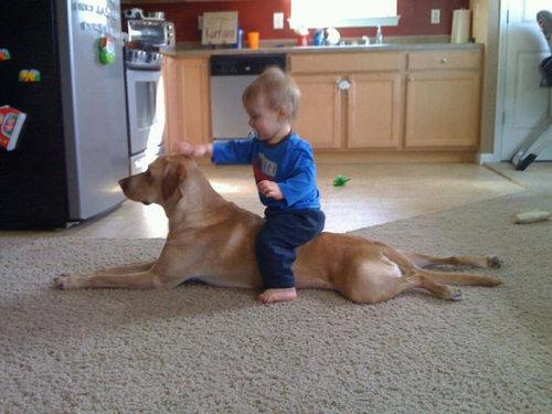 息子と愛犬の友情12