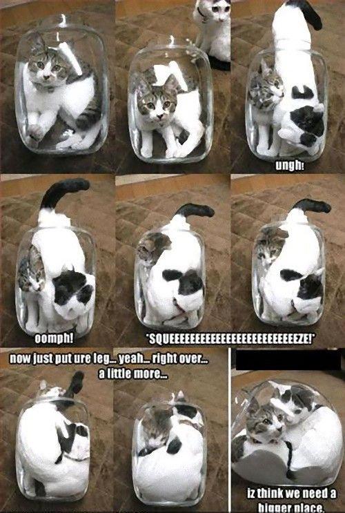 猫は液体説15