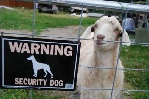 猛犬注意…と思ったら違う例11