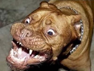 顔面凶器の犬TOP