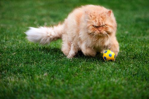 怒った猫10