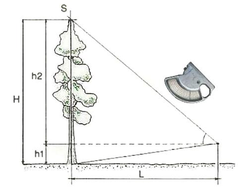 庭にある木の高さの測り方