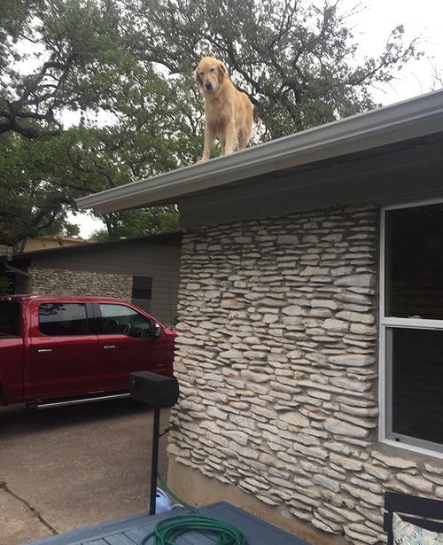 屋根の上にいる犬04