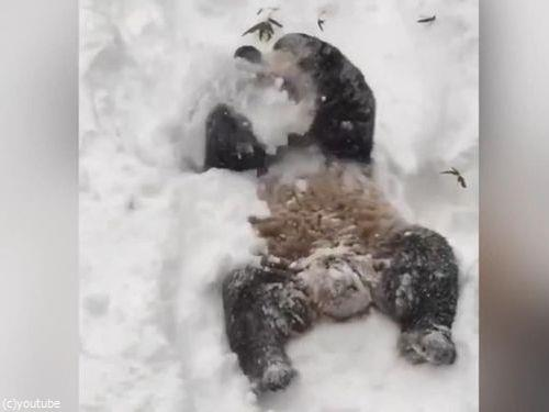 スミソニアン動物園のパンダ05