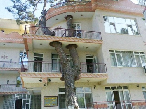 家を建てるために木を切らなかった人々00