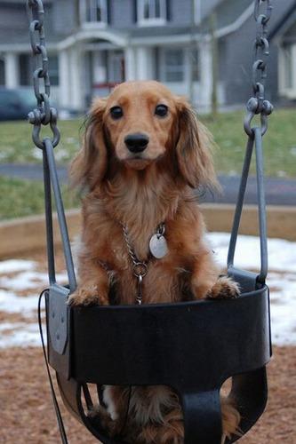 ブランコ犬07