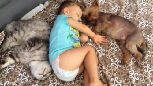 甘い!甘すぎる!赤ちゃんたちのお昼寝風景04