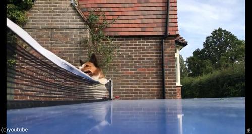 犬が卓球の審判をすると02