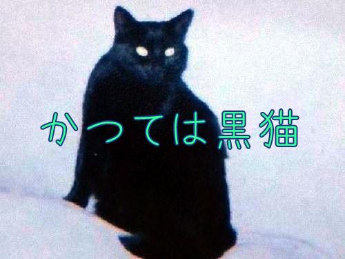 吹雪のような猫00