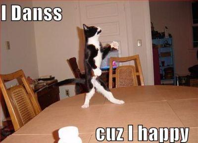 ハッピバースデーな猫12