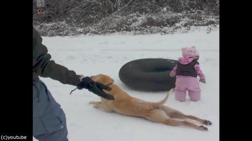 雪の日のわんこ04