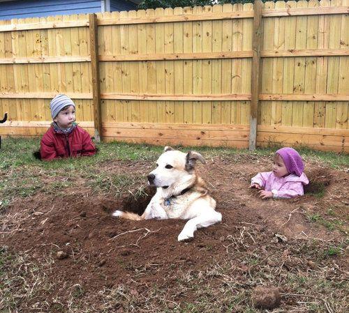 穴の中の犬03