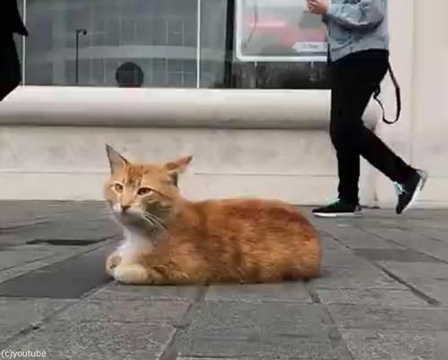 イスタンブールの猫00