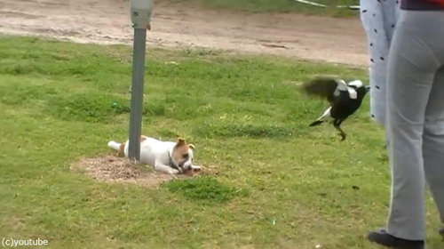鳥と犬は親友になりうる08