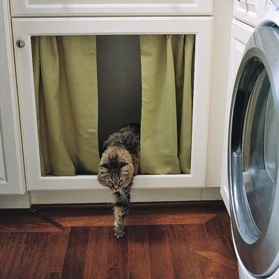 猫の飼い主が知っておきたいこと01