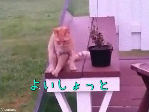 人間のように座る猫00
