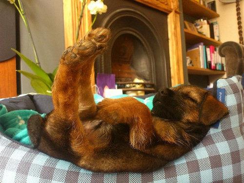 犬の寝相17