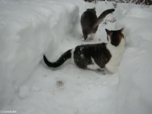 雪遊びが大好きな猫07