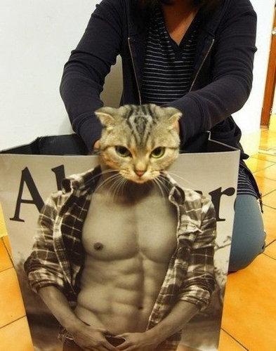 マッチョな紙袋に猫06