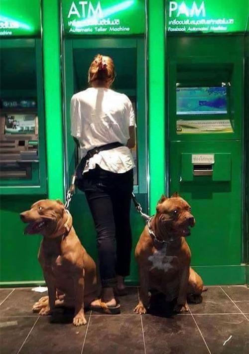 海外のATMと犬08