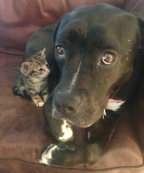 子猫を世話する犬のお母さん01