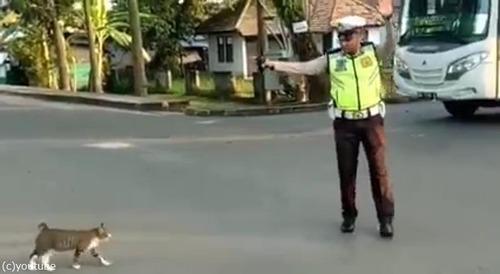 警官が猫を誘導する様子に和む02