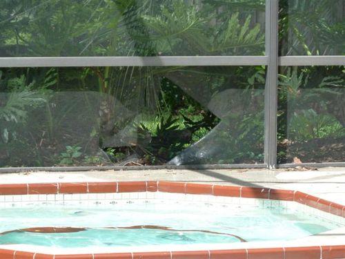 プールに動物20
