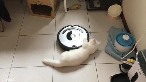 ルンバとともに回転する猫02
