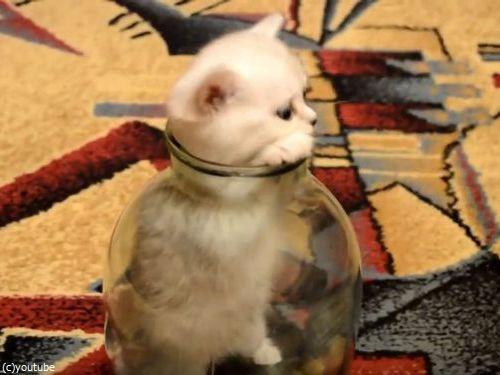 ビンの中の子猫03
