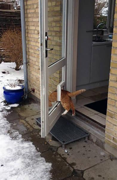 おかしな猫たち01